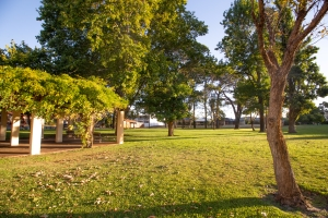 Tipuana Green Park in O'Connor