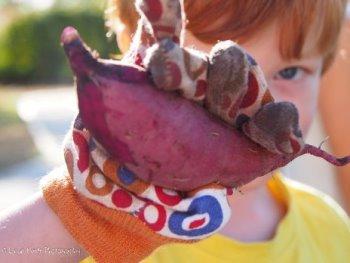 Child enjoying vegetable picking at the Hilton Harvest Community Garden.