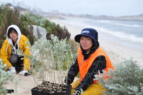 Tree planting day at the beach
